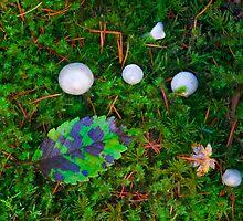 Natures Carpet by DawsonImages