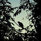 Blackbird Silhouette by FakeFate