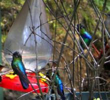 Eight Hummingbirds on Volcan Irazu Sticker