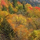 Fire On The Mountain by Gary L   Suddath
