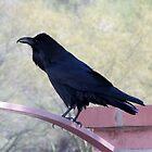 Raven by Ingasi