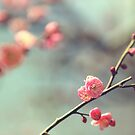 Pink Ume by BryanLee