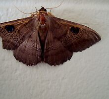 Wood Moth by elizabethrose05