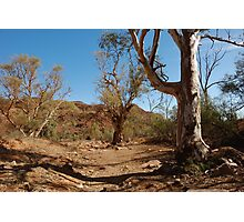 Looking Out From Chambers Gorge - Flinders Ranges - South Australia Photographic Print