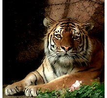 Tiger Eyes Photographic Print