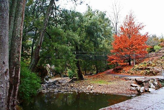 Suspension Bridge At Abercrombie by Evita