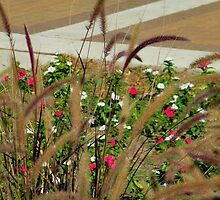 Pampas Grass And Flowers by R&PChristianDesign &Photography