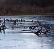 ice n sticks  by Jeff Stroud