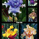 The Iris by Clive
