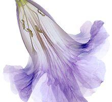 Lavender Crinoline by Marsha Tudor