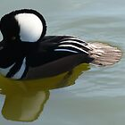 HOODED MERGANSER by Marilyn Grimble