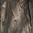 Honey Locust Tree Bark by Anna Lisa Yoder