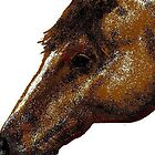 Appaloosa Eye by Carole Boyd