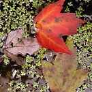 Fall by paula whatley
