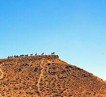 Wild Horses Monument by Tamara Valjean