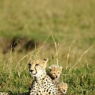Cheetah happy family by Yves Roumazeilles