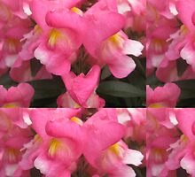 Snap Dragon Flowers by astudent