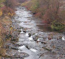 An Avenue of Fall by Okgah