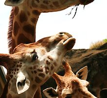 Three heads better than one by Kala Lampard