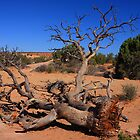 Desert Tree by Paul J. Owen