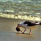 Sea Gull by DaveBuse