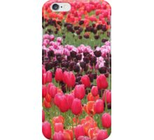 Field of Tulips - Canberra Floriade iPhone Case/Skin