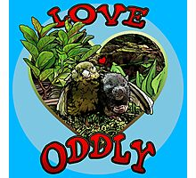 LOVE ODDLY (blue) Photographic Print