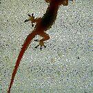 Silouhette of the Lizard by Virginia N. Fred