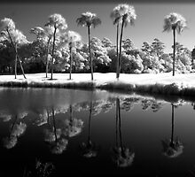 9 Palms by Rene Hales