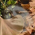 Ghost In leaves by adivawoman