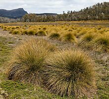 Buttongrass Plains, near Lake Bill, Tasmania by tasadam
