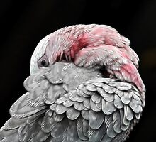Dreamy Preen by Lesley Smitheringale