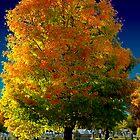 fall foliage by AshleyE