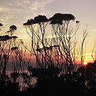 Malua Bay Sunrise by gondwana