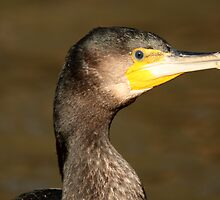 Cormorant by margotk