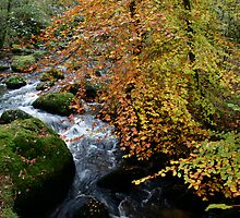 Autumn Beech and River Dart by Amanda Gazidis