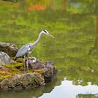 Heron on the mirror pond  at the Golden Pavilion, Kyoto. by johnrf