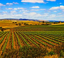 Truro Vines,South Australia by rochelle