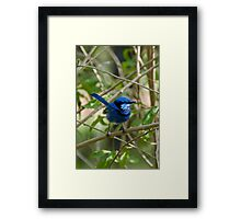 Chatting up the Ladies Framed Print