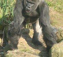 Macho Monkey! by karenuk1969
