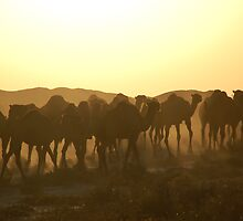 Camels of Turkmenistan by Peter Gostelow