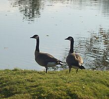 Mr. and Mrs. Goose by AutumnLeaves