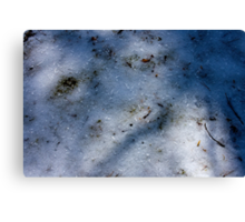 Winter Shadows in Ice Canvas Print