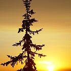 Montana Sunset by Chris Filer