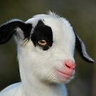 Baby Billy Goat by venny