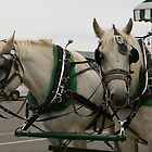 Horse Drawn Carriage by klphotographics