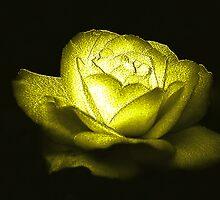 Heart of Gold by Dawn B Davies-McIninch