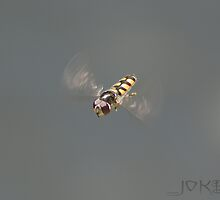 MID AIR HOVER FLY by Joker
