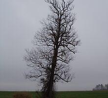 Leaning Tree by WildestArt