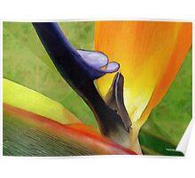 HC 31 Flowers Poster